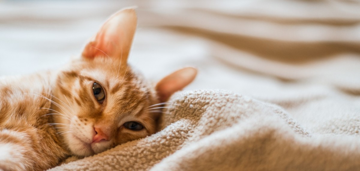 tips-on-keeping-your-cat-happy