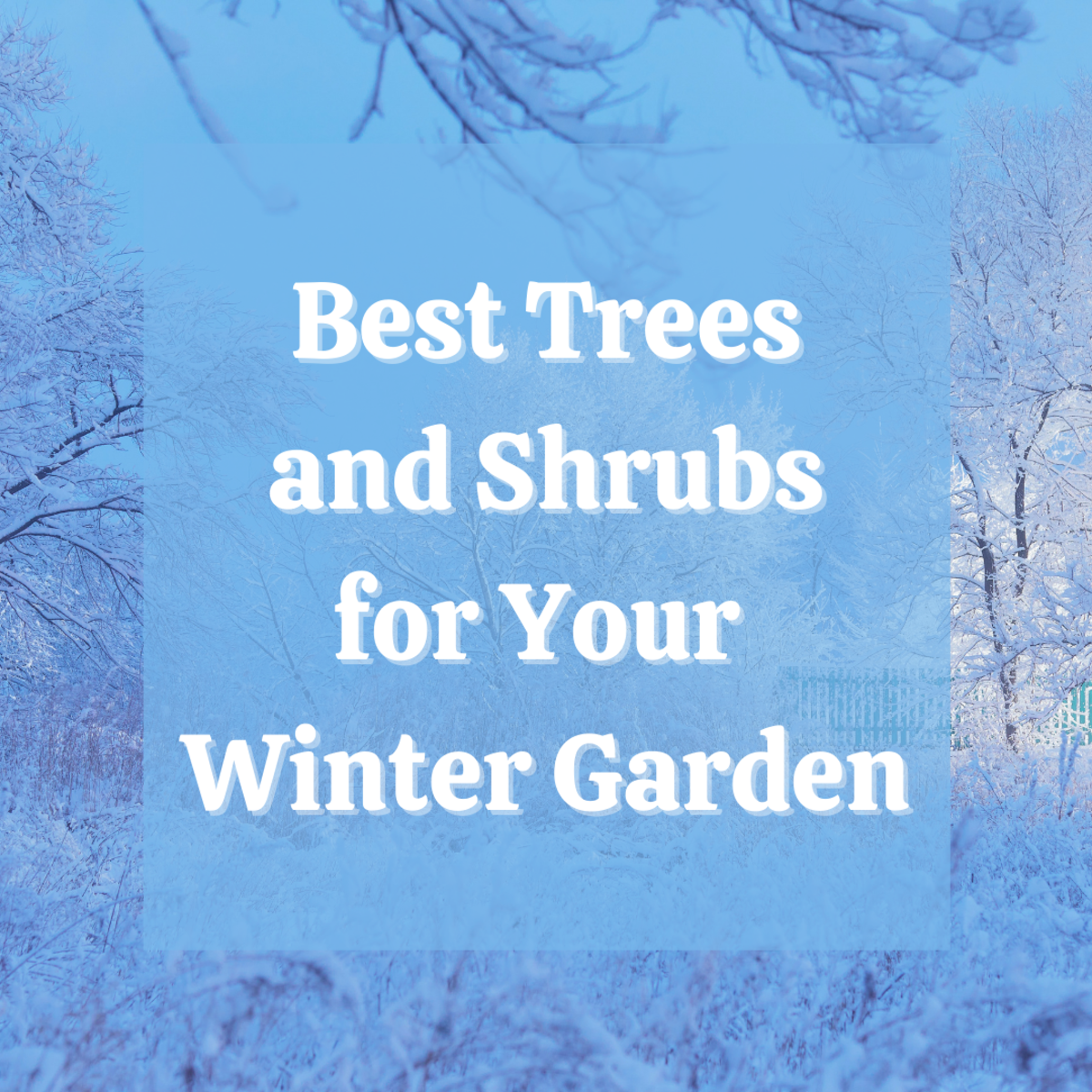 Discover 13 amazing shrubs and trees to plant in your garden to ensure color and beauty even in winter months
