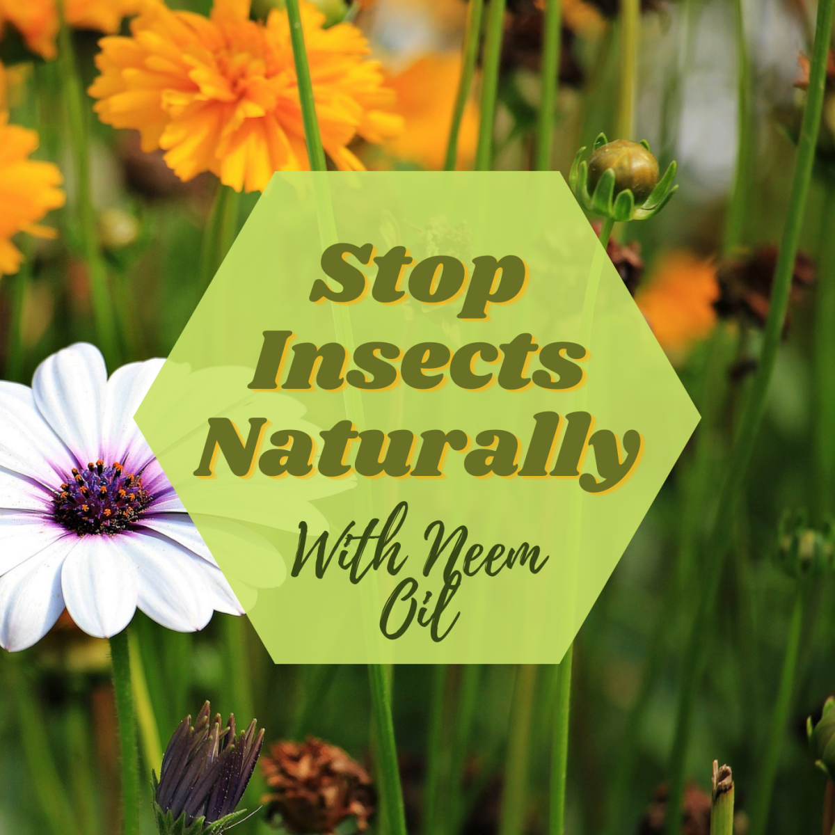 Get rid of your insect problem with a natural insecticide like neem oil.