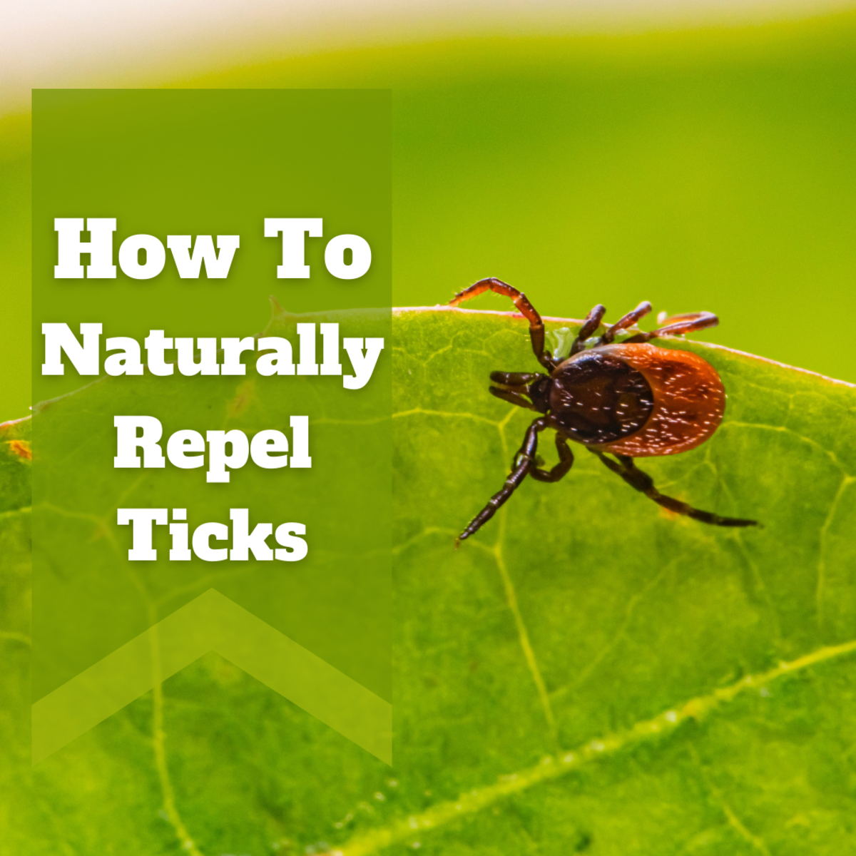 How to Repel Ticks Naturally