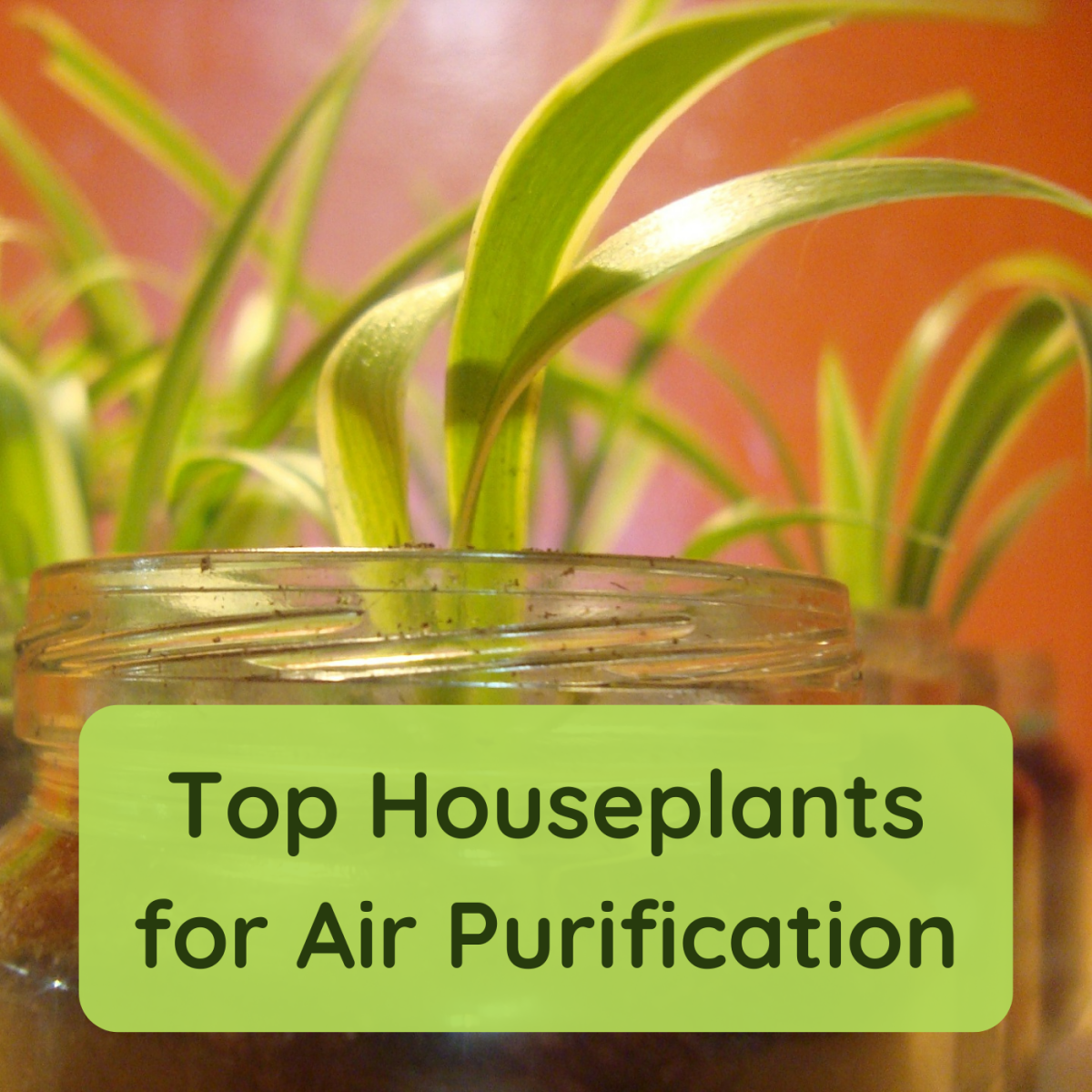 7 Air-Purifying Houseplants to Clean Your Indoor Air