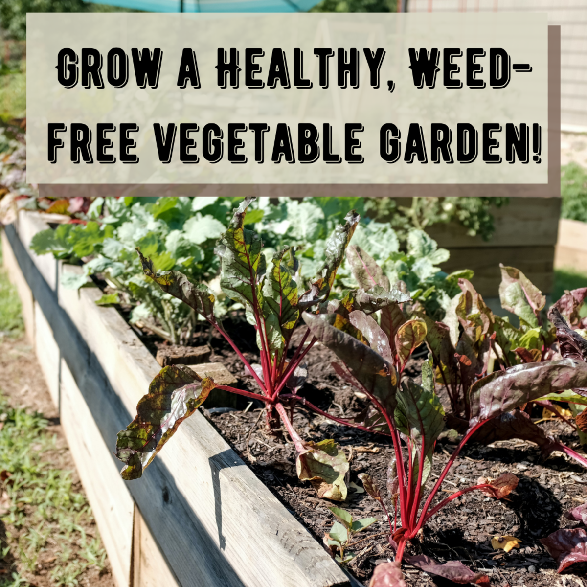 tips-on-how-to-grow-a-vegetable-garden