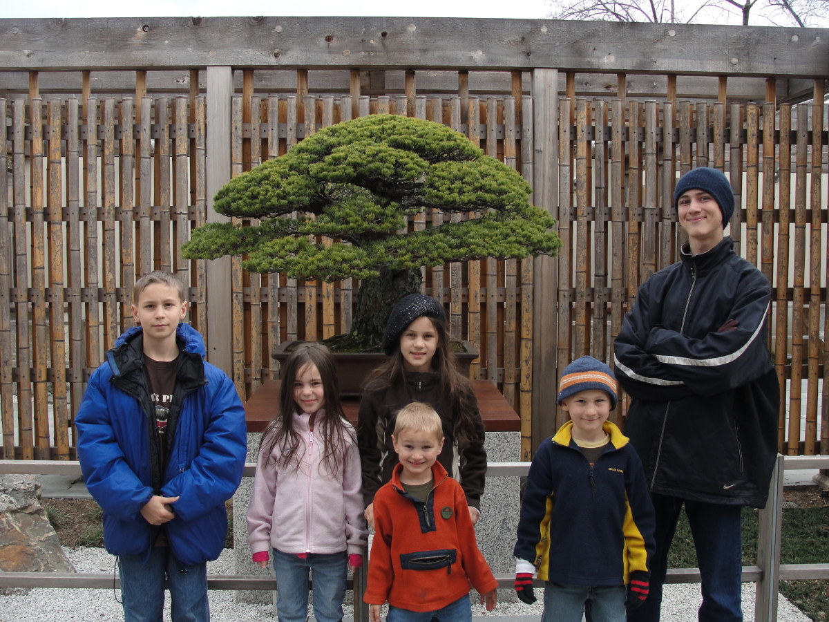 We did, however, agree that the National Arboretum could easily be skipped if you have limited time. We did seek out the Yamaki Bonsai tree, one of the oldest bonsai trees in the world.