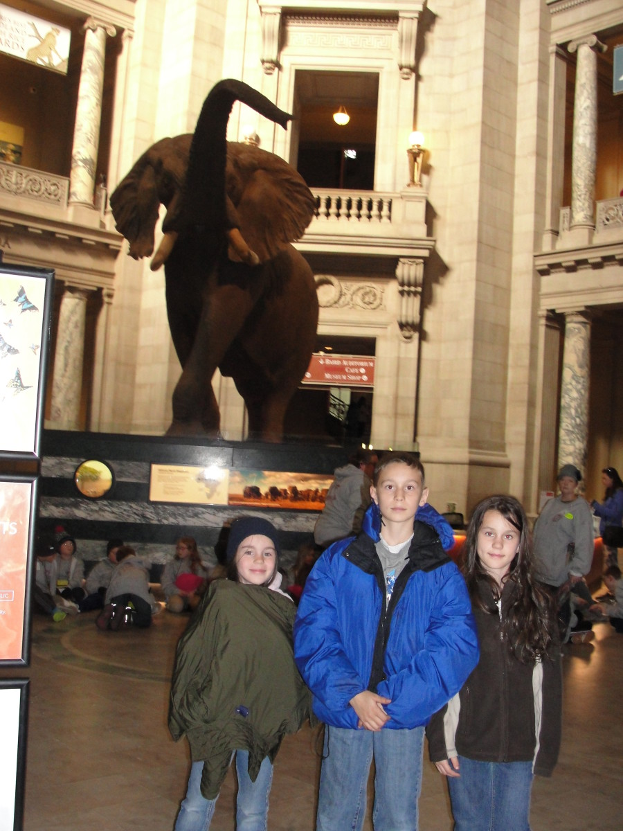 "At the Museum of Natural History, my children immediately recognized the huge bull elephant from the ""Night at the Museum"" movie...."