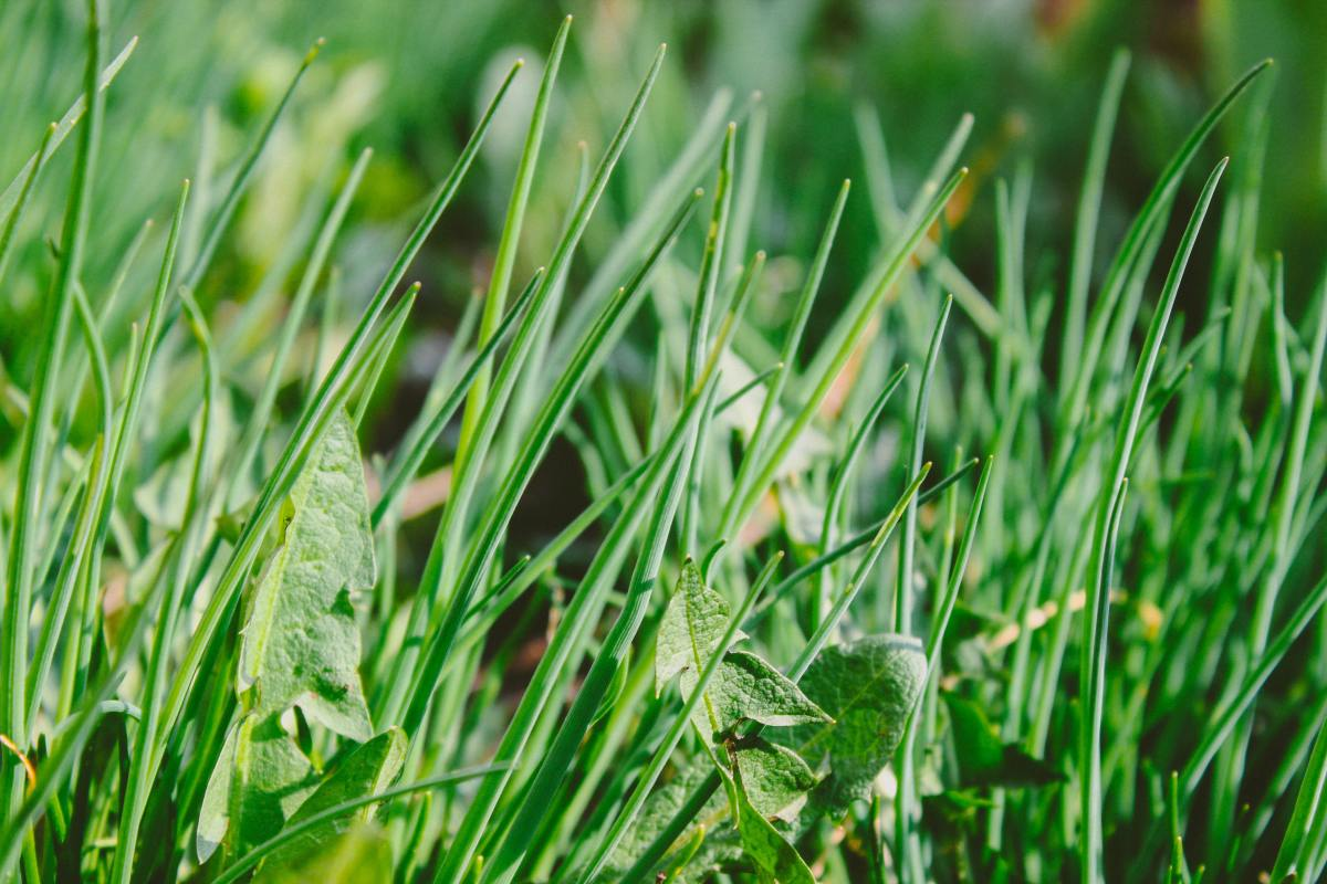 Keeping weeds and grasses trimmed or removed in the aisles between beds will prevent them from spreading into your garden.