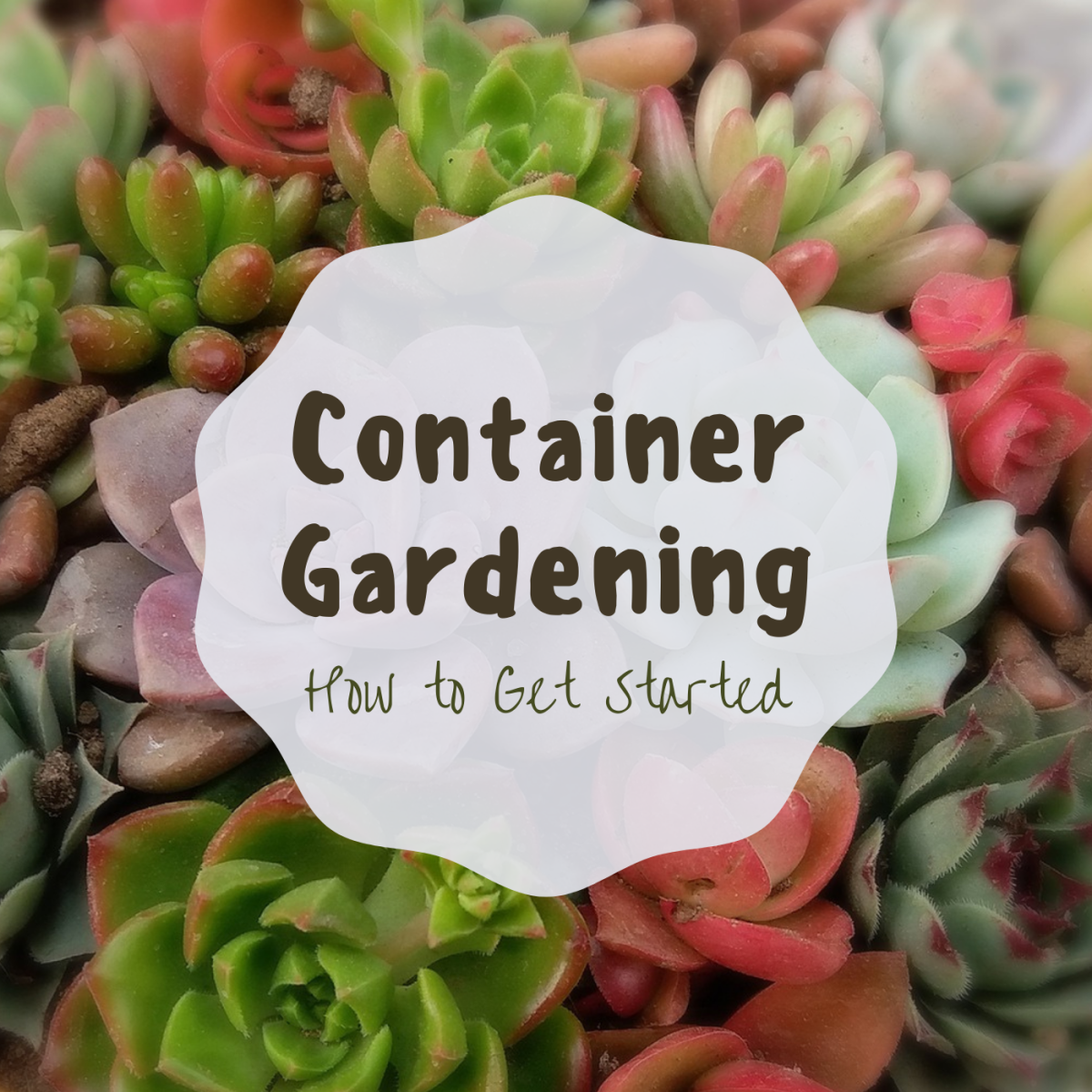 Learn how to choose the right container and soil for your garden, ensure it has adequate drainage, and water it correctly.