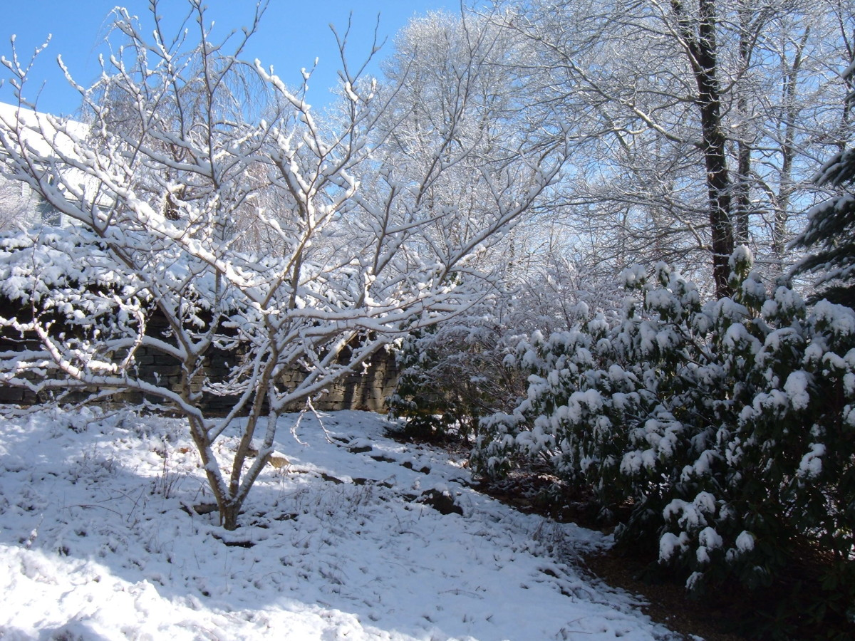 Winter Landscape Ideas