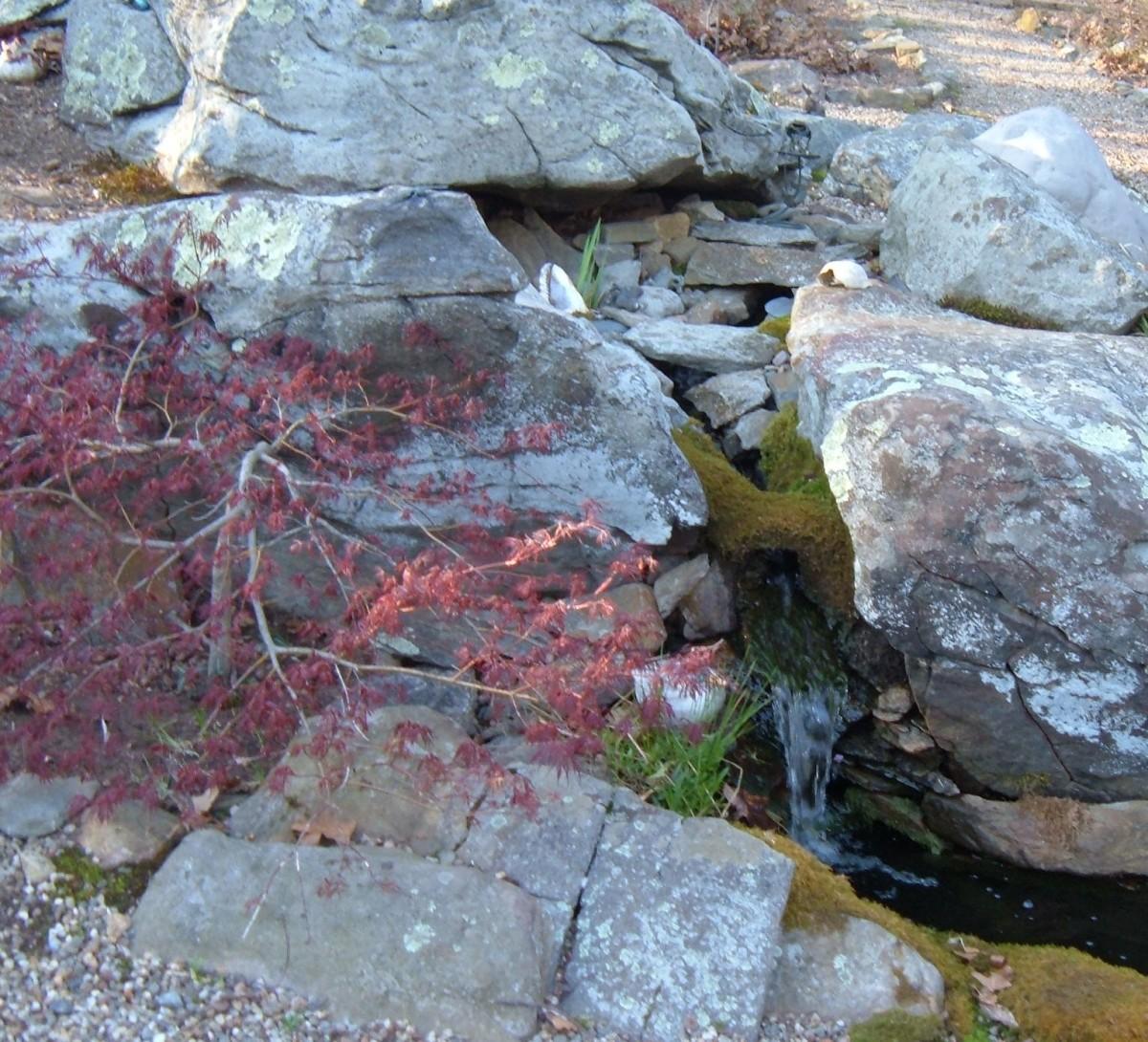 Winder Landscape Ideas: Garden Pond in Summer