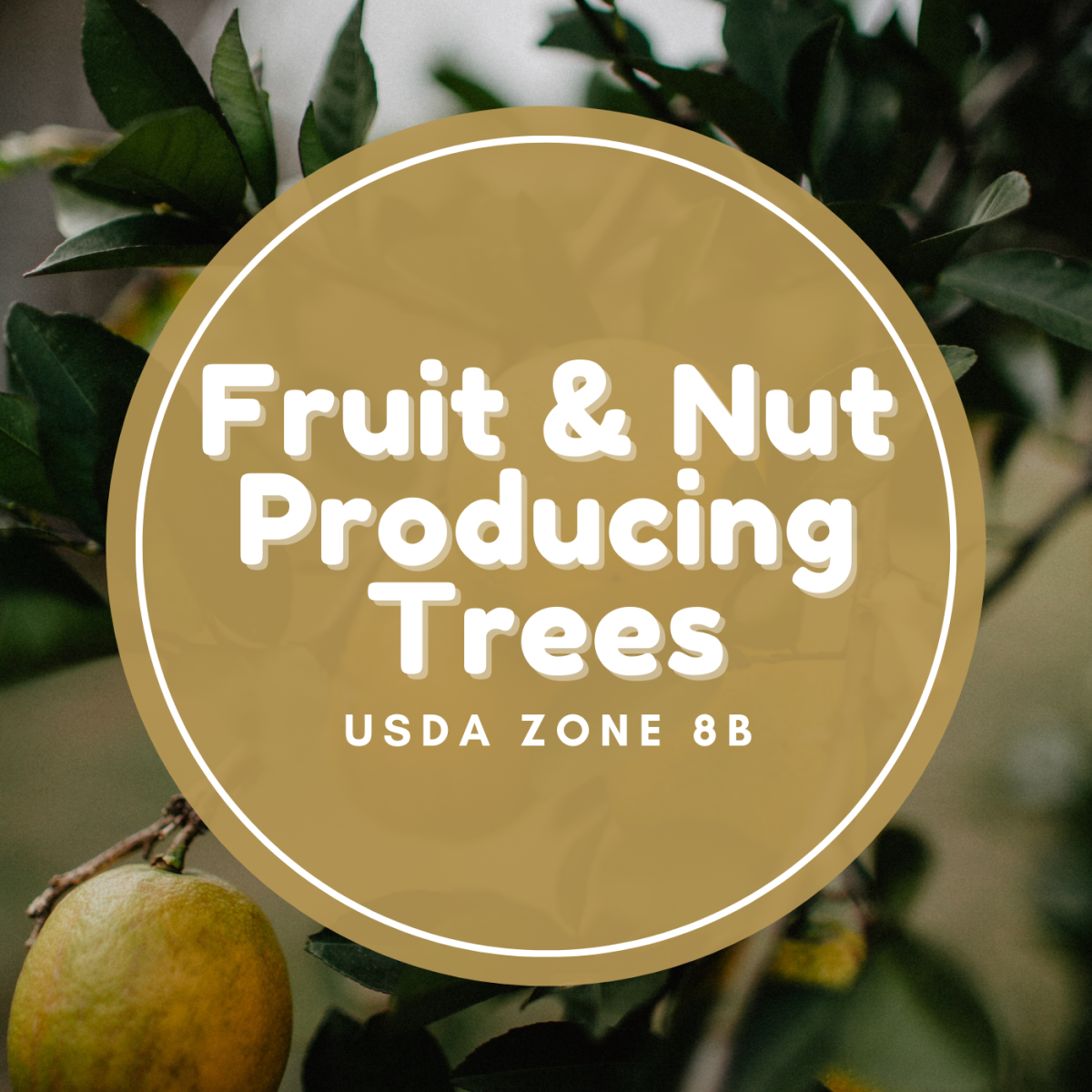 Fruit and nut producing trees.