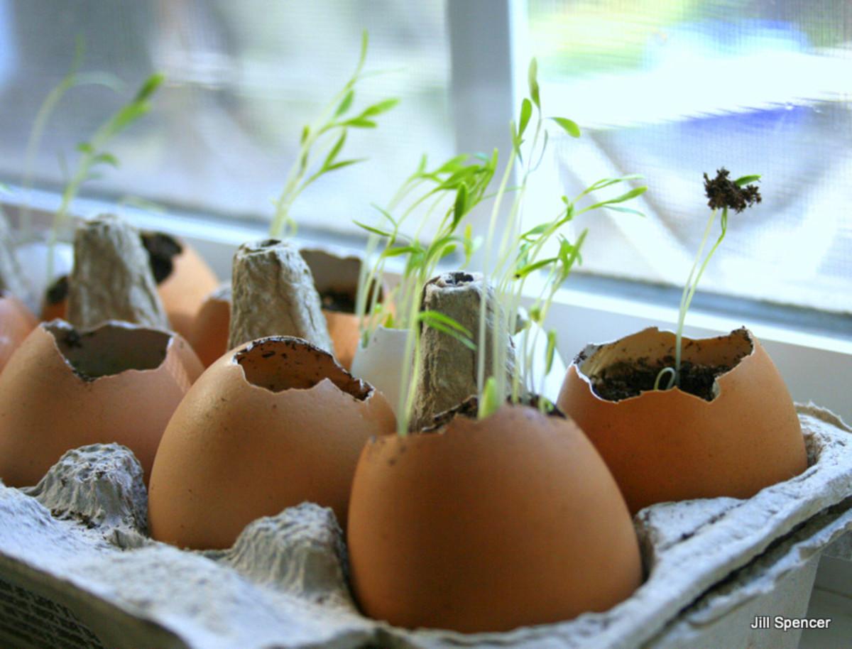 eggshell-starter-pots-for-seedlings