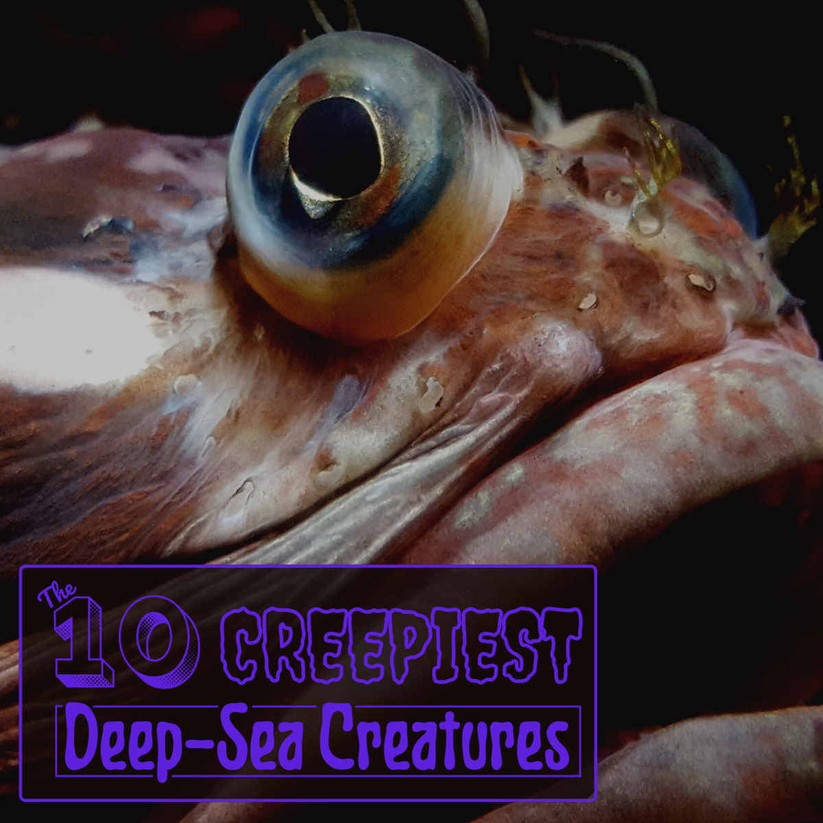 The deepest parts of the earth's oceans are some of the least explored and most alien landscapes on the planet.