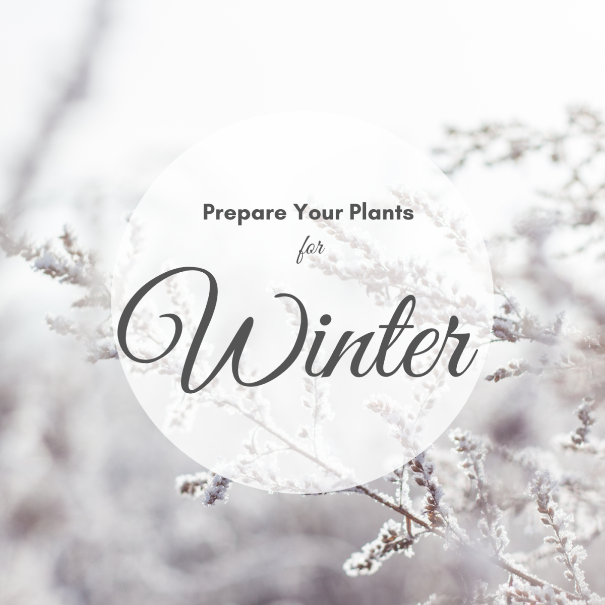 Learn how to bring your indoor plants inside for winter with my 10 pro tips.