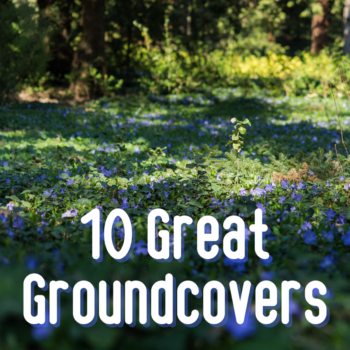 Learn about 10 diverse groundcovers to suit your garden, from flowering mats to creeping shrubs.