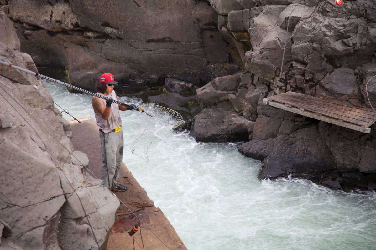 Let's go dip net fishing in Alaska. Dip net fishing on Klickitat River Courtesy Ryan Hagerty at digitalmedia.fws.gov