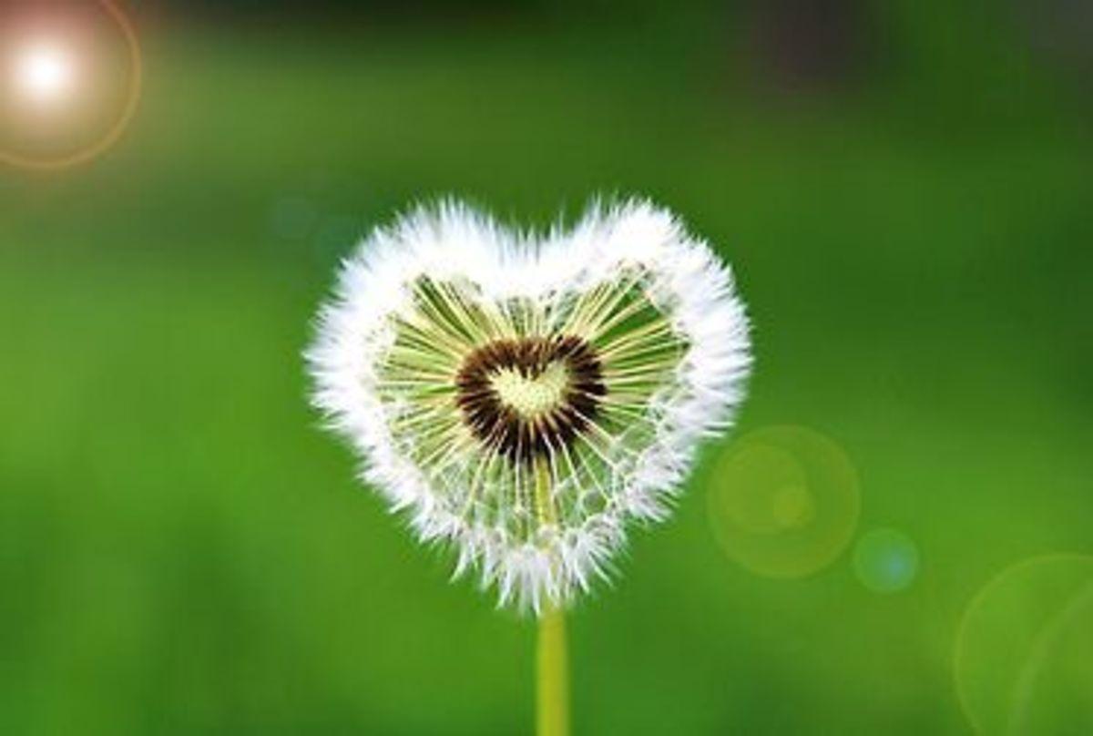 ways-to-find-true-love