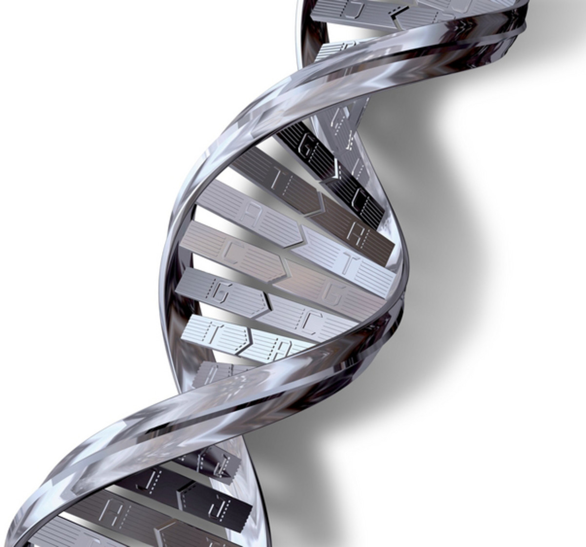 DNA and Genetic Aging.