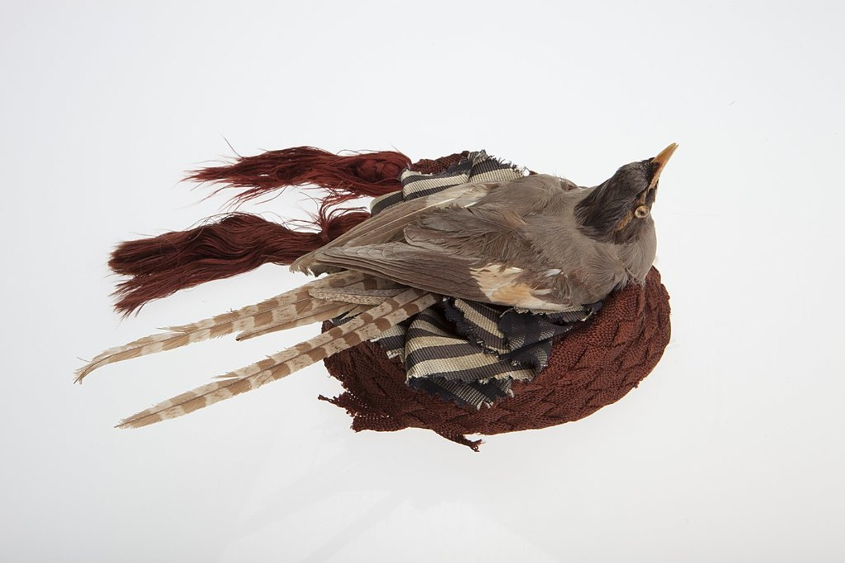 Hat decorated with dead bird circa 1870 - 1880