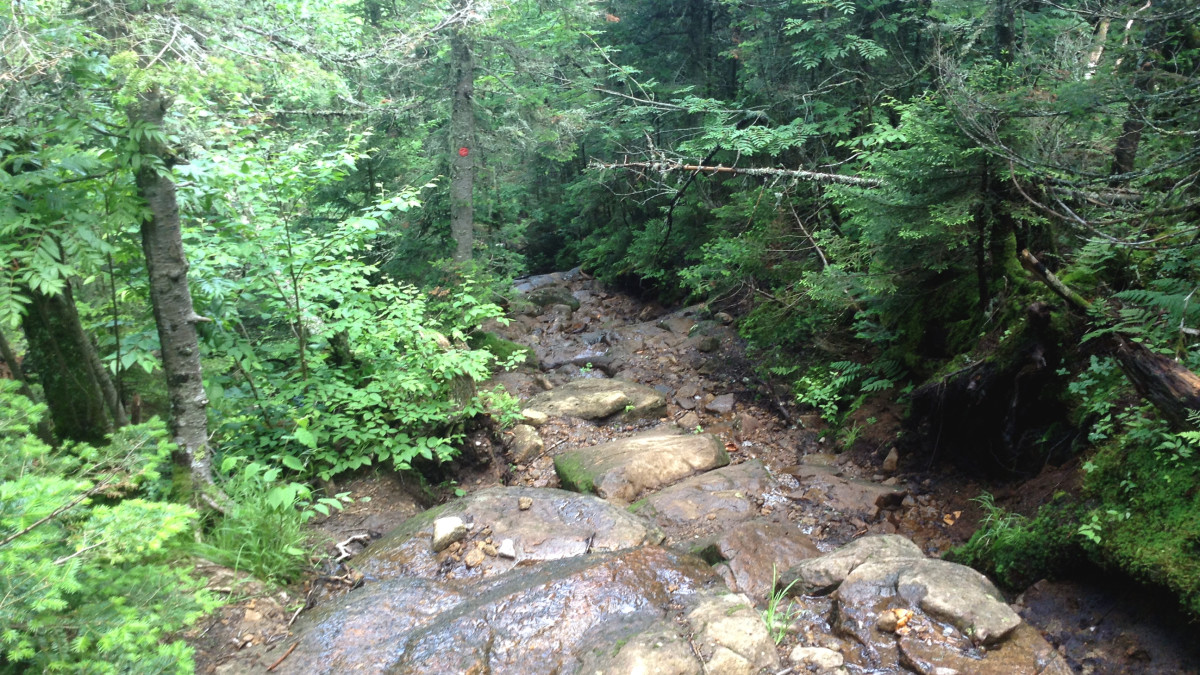 Looking back down the creek bed