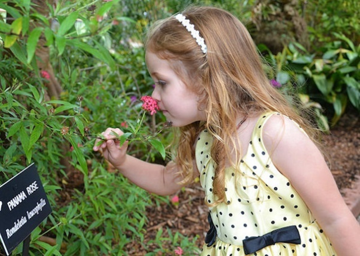 Pic: Gemini Smelling a Flower at a Park