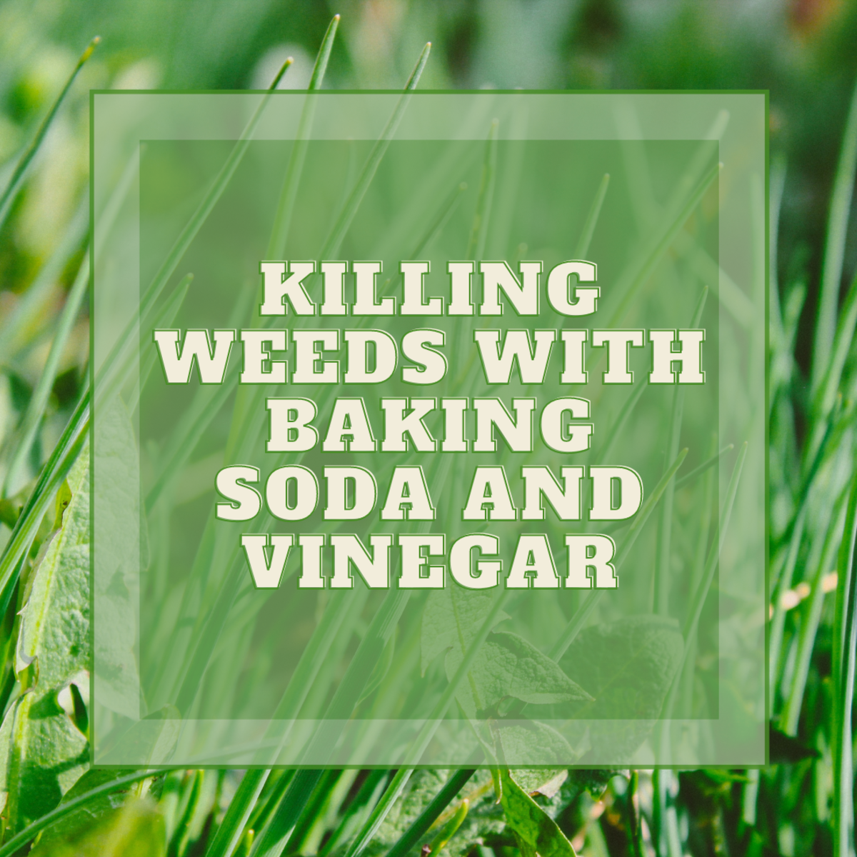 Learn how to use baking soda and vinegar to kill pesky weeds