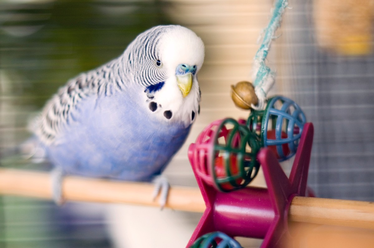 10-most-common-pet-in-the-us