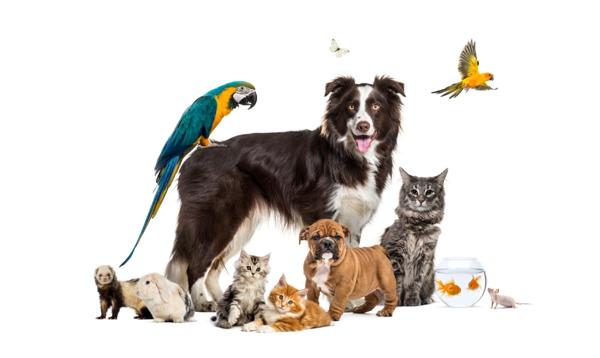 10-most-common-pets-in-the-us