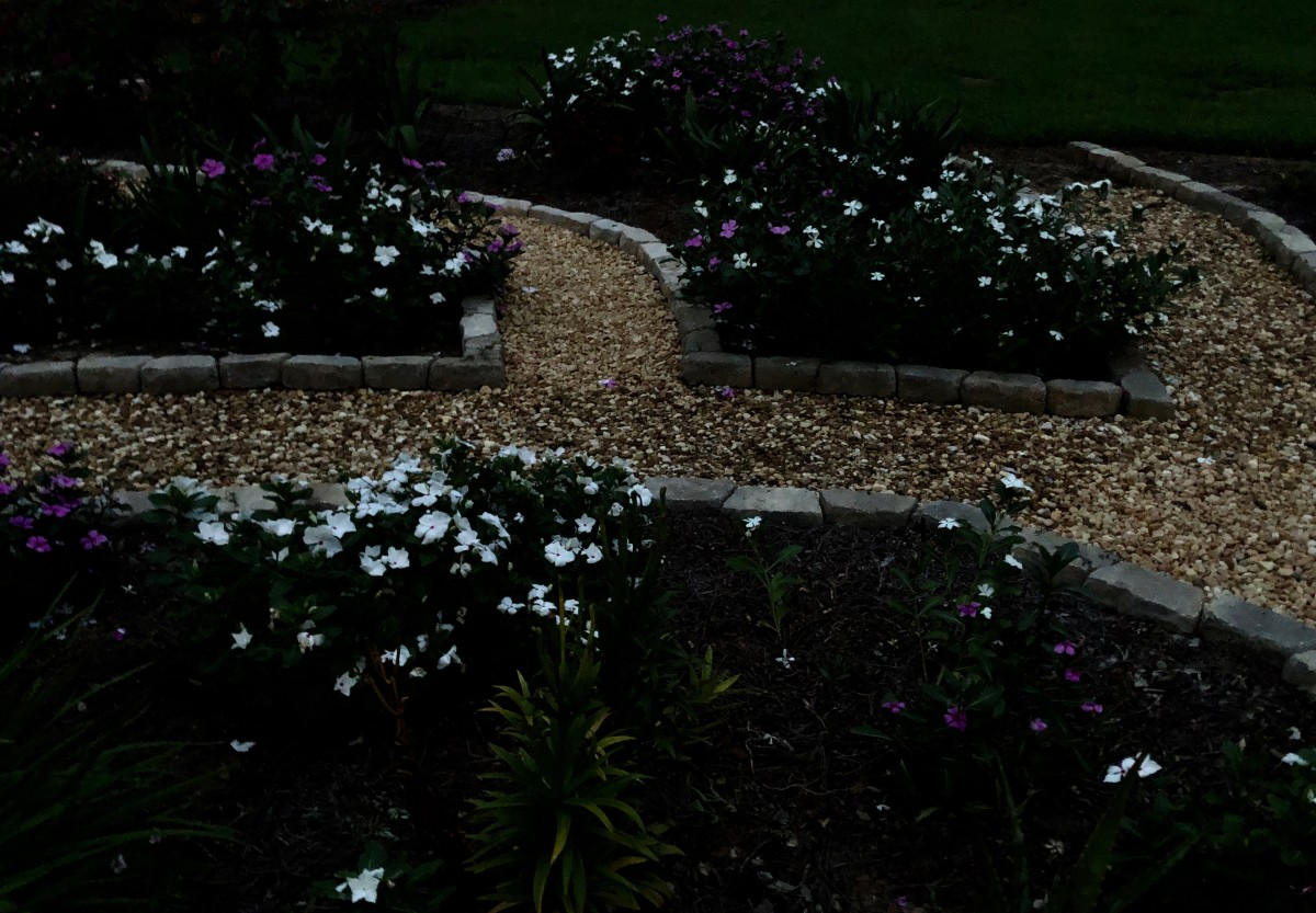 Part of my night garden. Those white flowers almost glow in the dark!