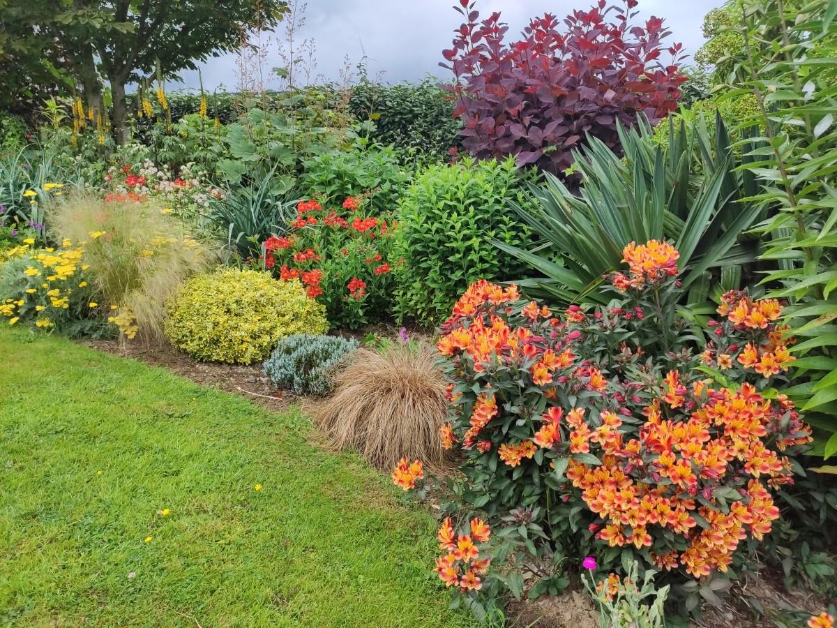 Peruvian lilies like the orange Alstroemeria 'Tesronto' (Indian Summer) shown here make a beautiful addition to any garden.