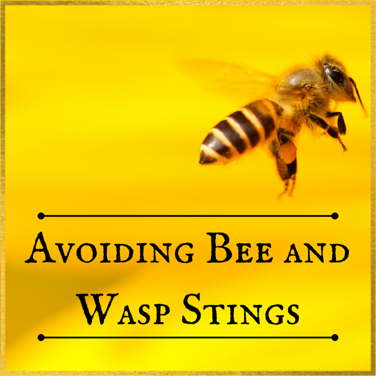 This article will teach you about bees, wasps, and hornets, explaining what motivates them to sting and how to avoid getting stung