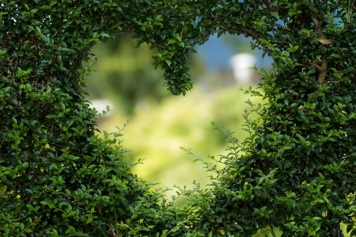 Heart Cut Out in the Bush