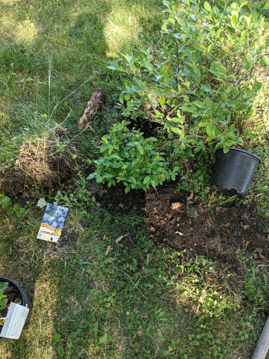 Make sure dirt is around plant