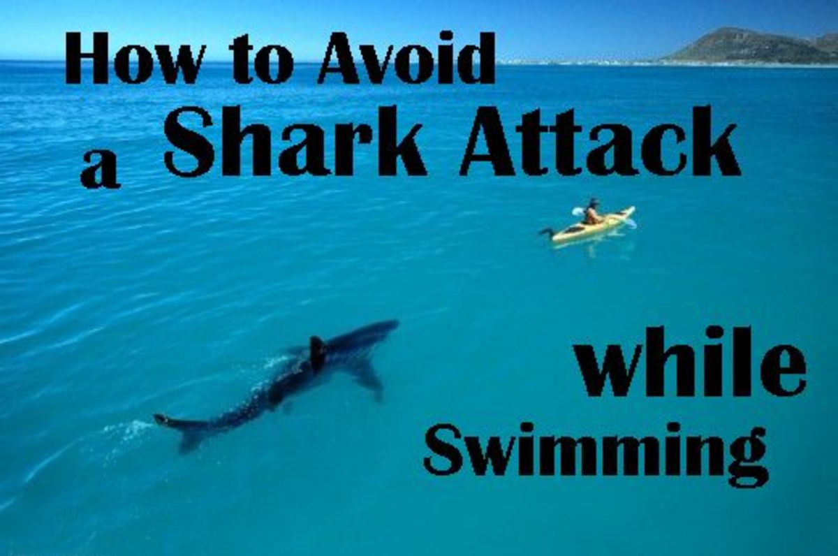 How to Avoid a Shark Attack While Swimming