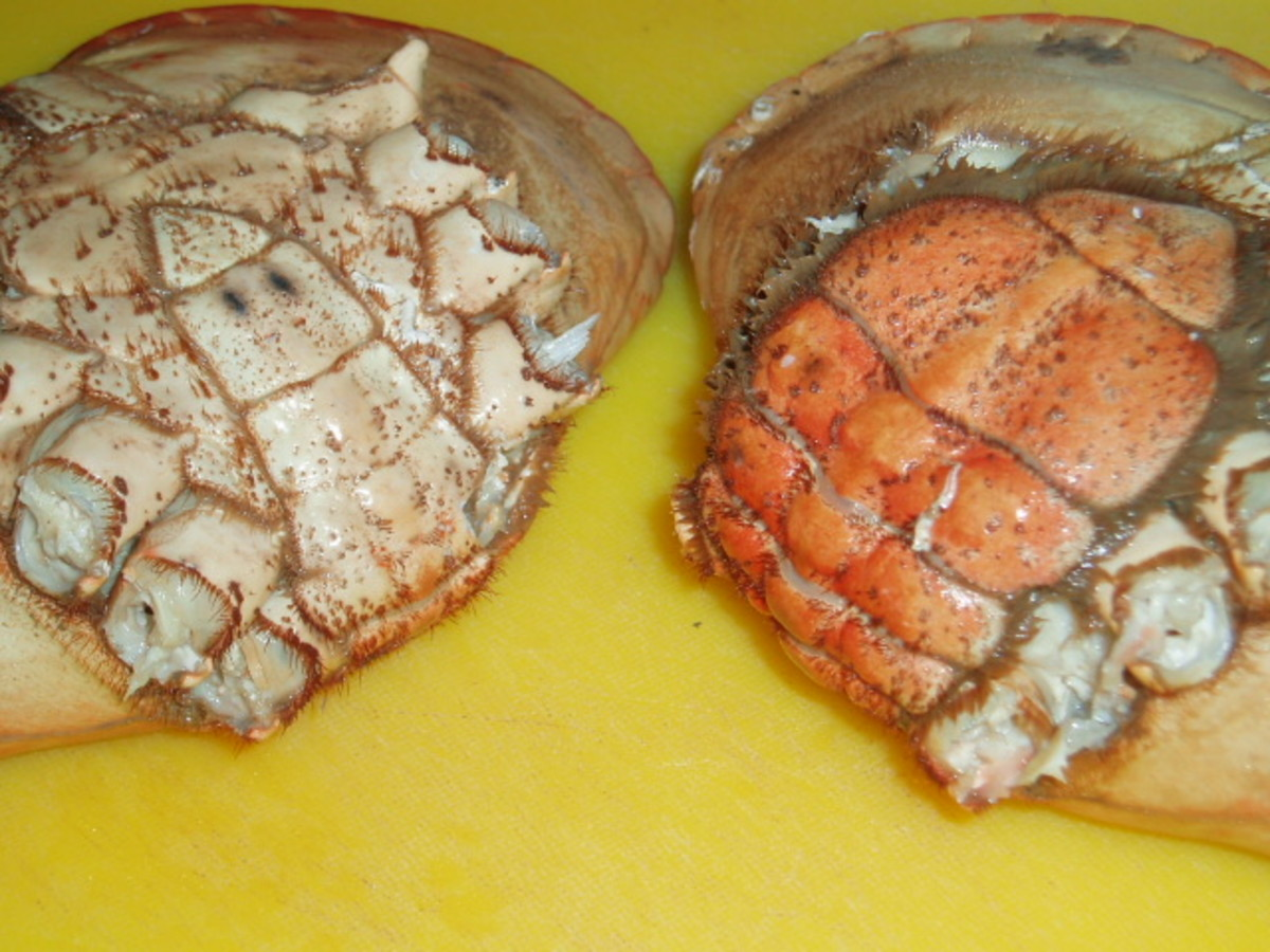 compare the difference between a cock and hen crab.