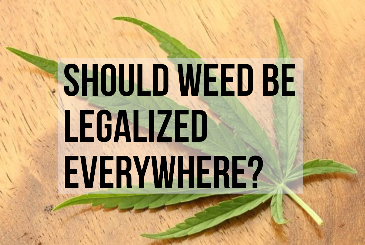 Pros and cons of legalizing cannabis: A marijuana leaf, showing its distinctive shape.  It is actually the flowers, or buds, that are generally smoked, however.  Marijuana can also be processed into other forms of cannabis, such as hash and hash oil.