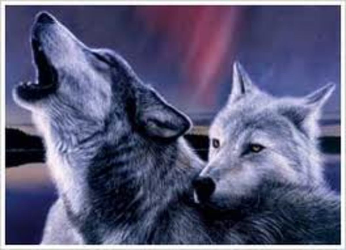 The Two Wolves That Fight Inside You