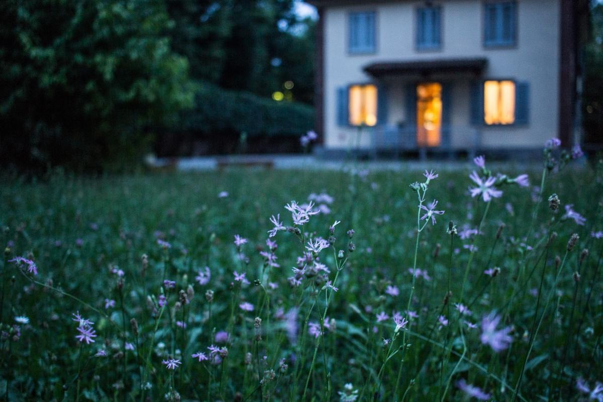 Look at your garden at night to find pests you would miss in the daylight.