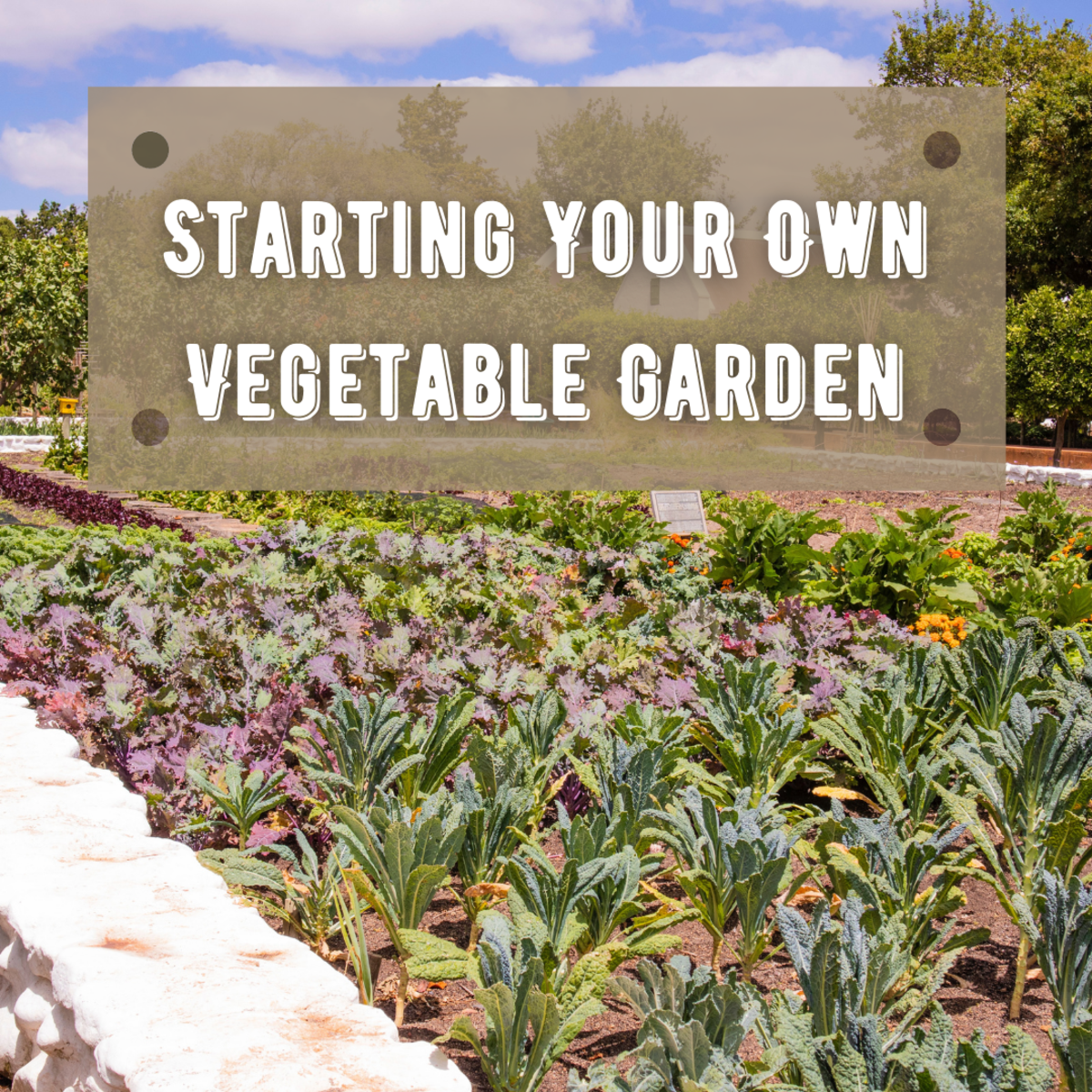 Learn everything you need to know about planting your first vegetable garden, including info on caring, feeding, pests, and diseases.