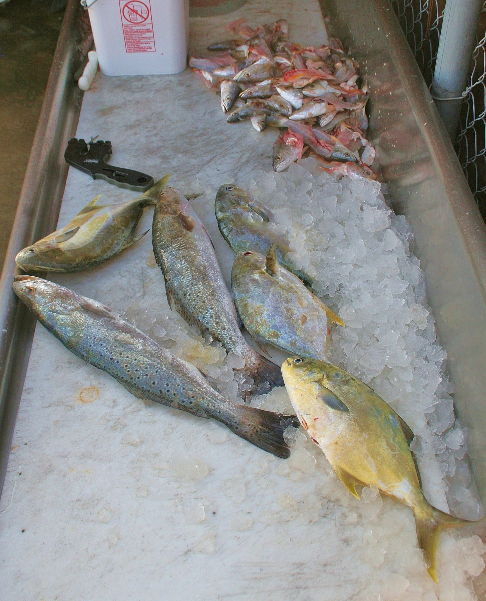 Pompano are the fish on the right.