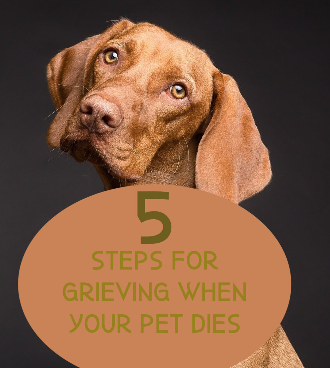 Talk about your loss with fellow animal lovers and don't expect those who aren't to understand your sorrow.