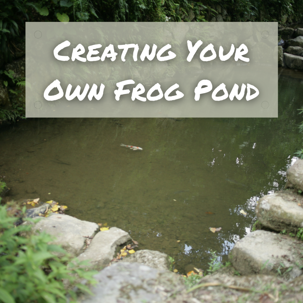 Learn everything you need to know about how (and why) to create your own frog pond!