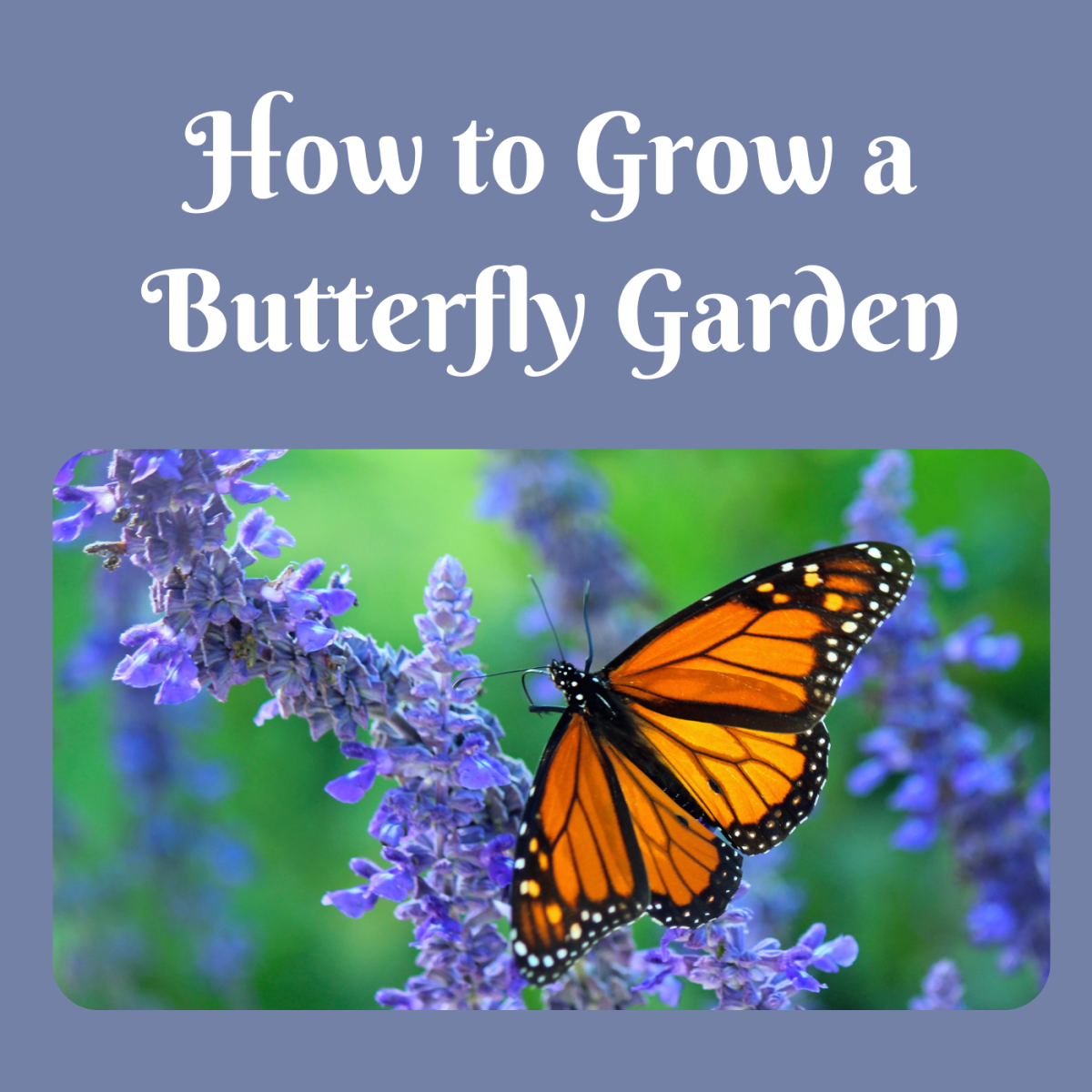 Attract butterflies and other pollinators to your garden with plants and fruit.