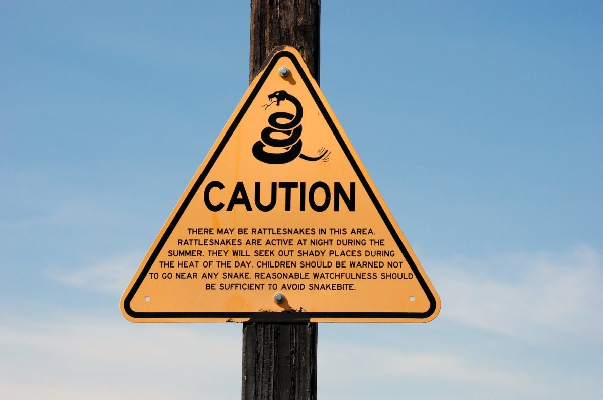 Warning!  Deadly rattlesnakes ahead!  Read at your own risk!