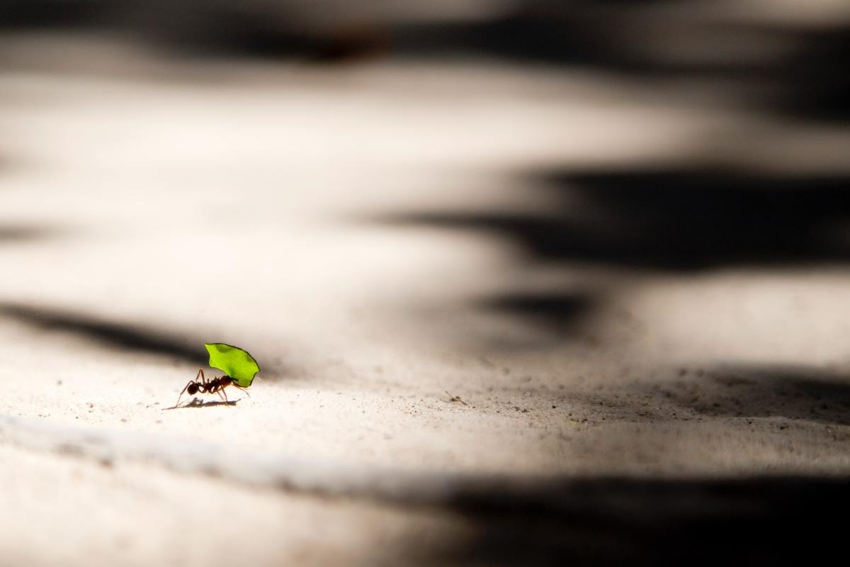 How to Get Rid of Ants in Your Driveway and Yard