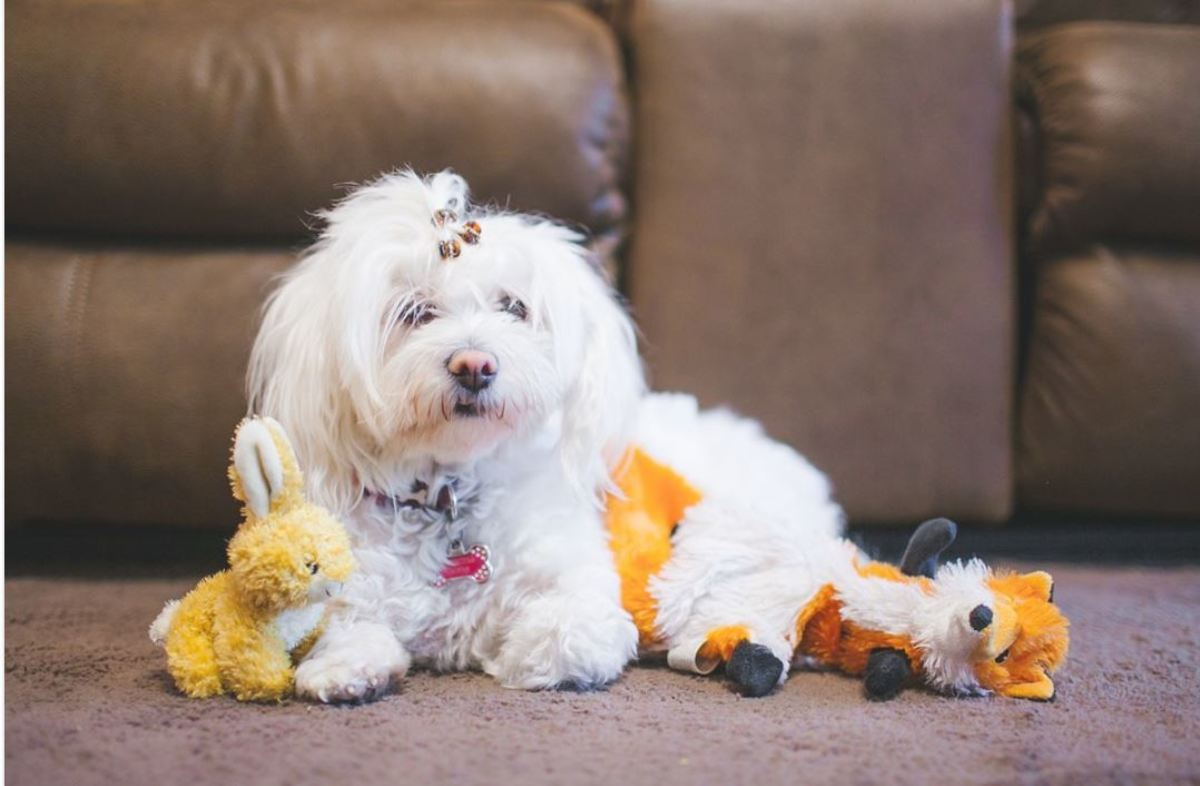 Before sitting on the couch, make sure to provide your dog with some toys or a fun activity to engage him,