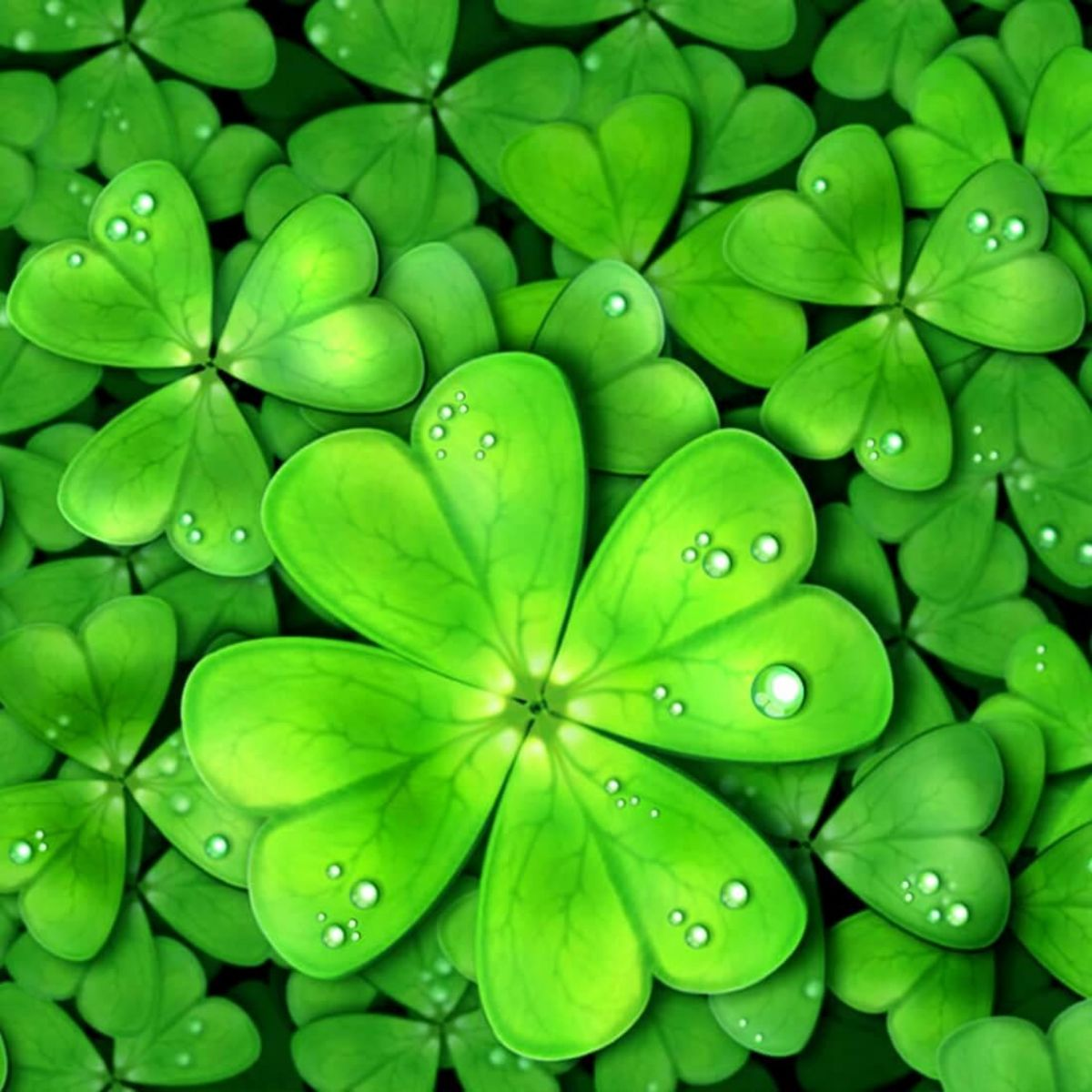 Fun fact: I found not one, but two four leaf clover 4 years ago and they did bring me luck!