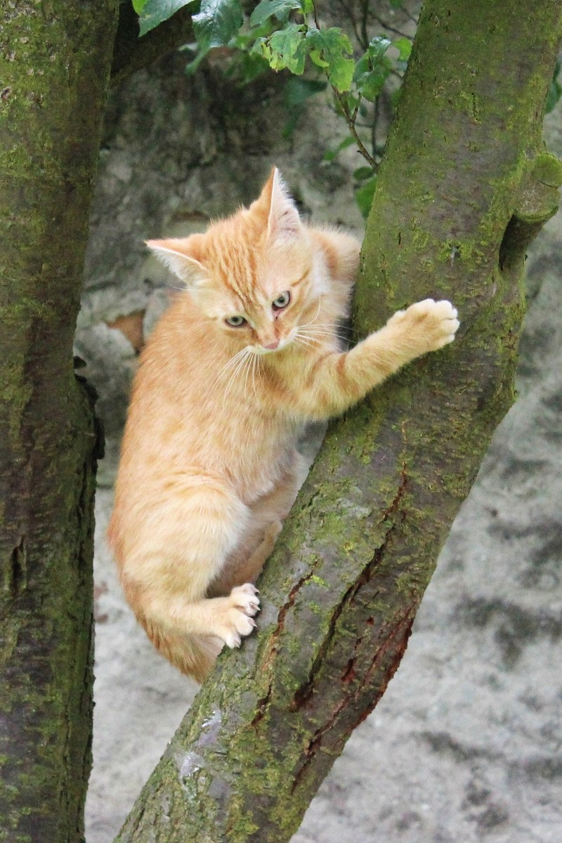 At the point when cats climb a tree