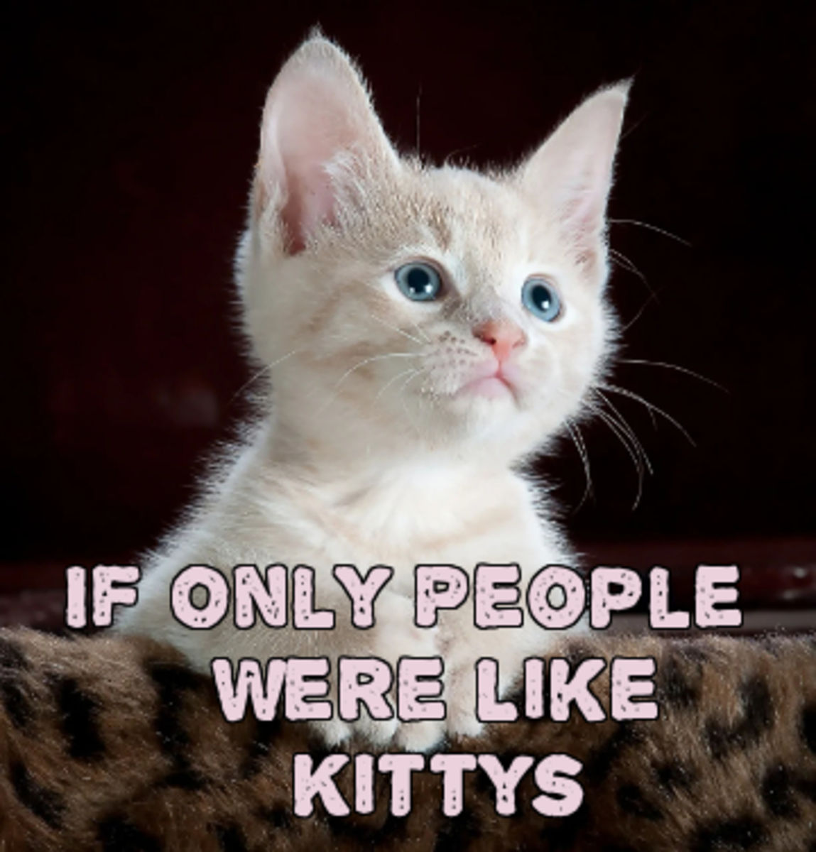 if-only-people-were-like-kittys