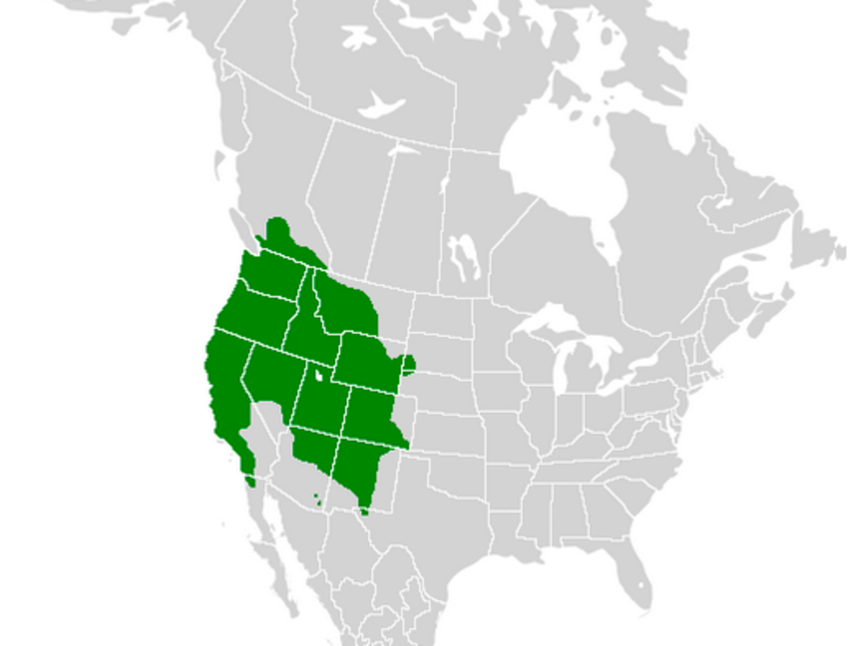Range of the western tiger swallowtail