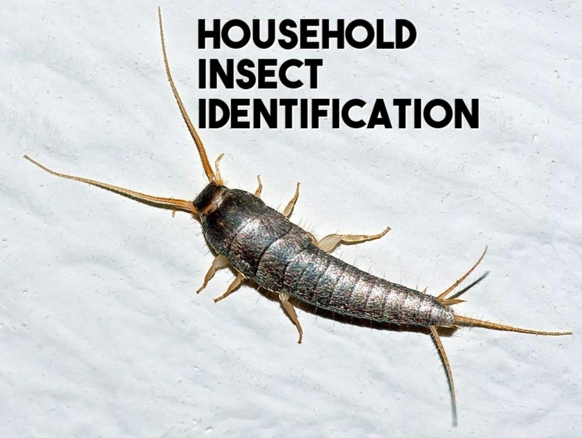 identify-house-bugs
