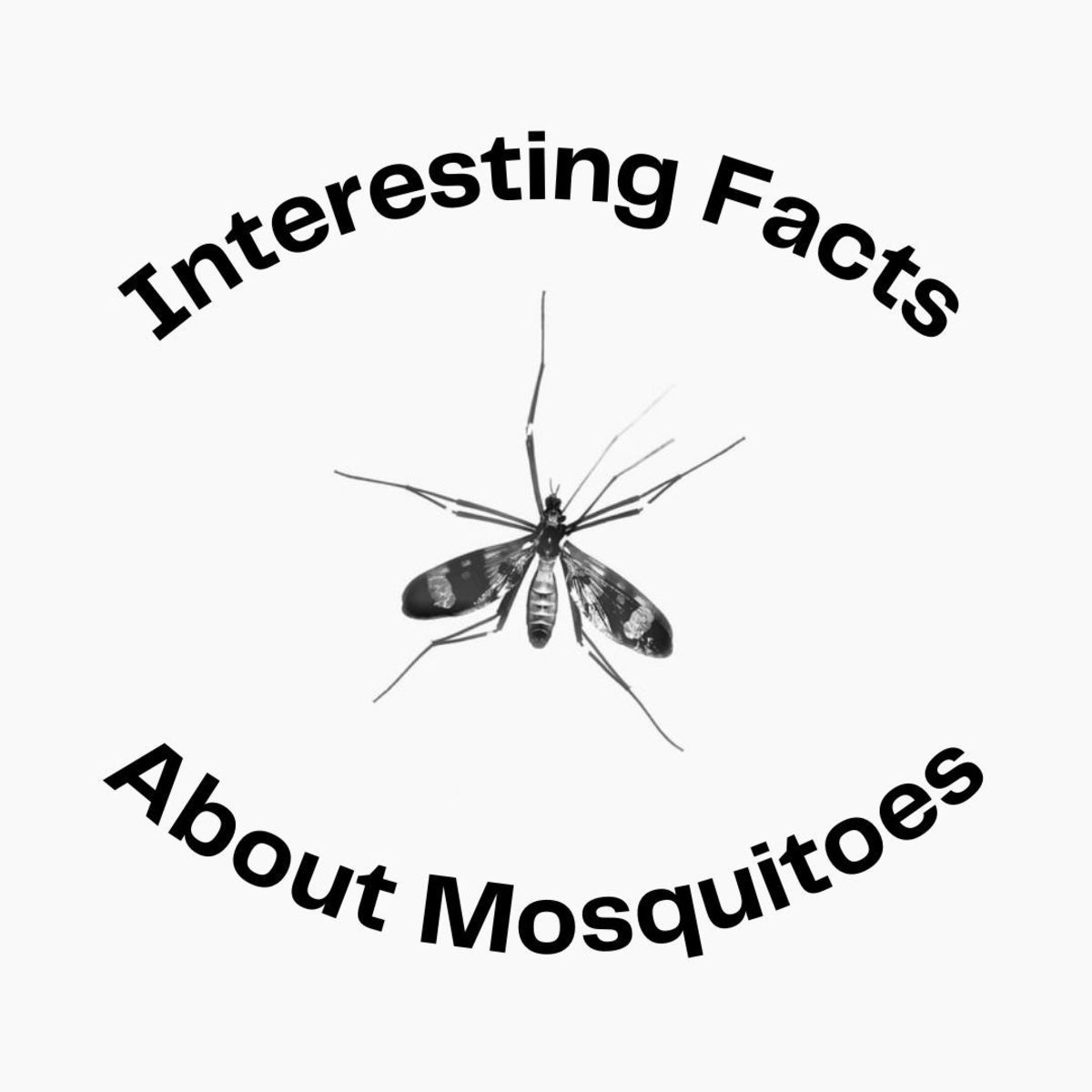 Believe it or not, there is much more to mosquitoes than you think.
